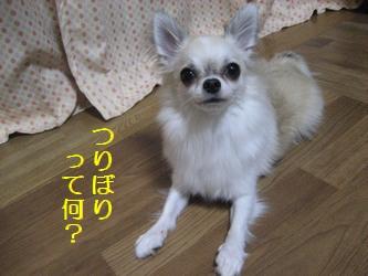 つりぼり1