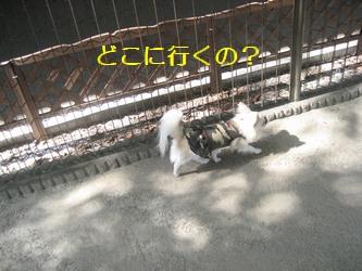 お台場11