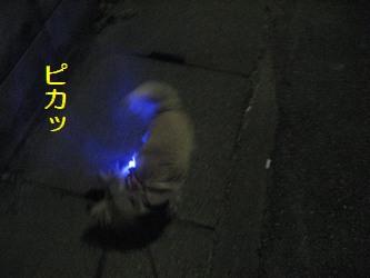 夜の散歩3