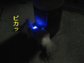 夜の散歩2