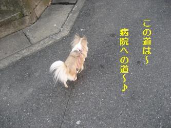 この道は!
