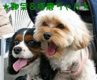 タッ君&まりなちゃん