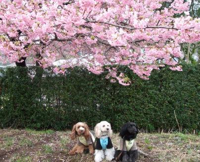 3姉妹と桜ちゃん
