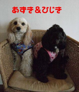 あずき&ひじき
