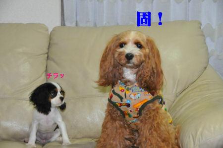くるみ(固)