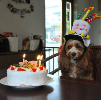 kurumiとケーキ