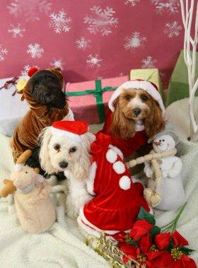 くるなつあずクリスマス
