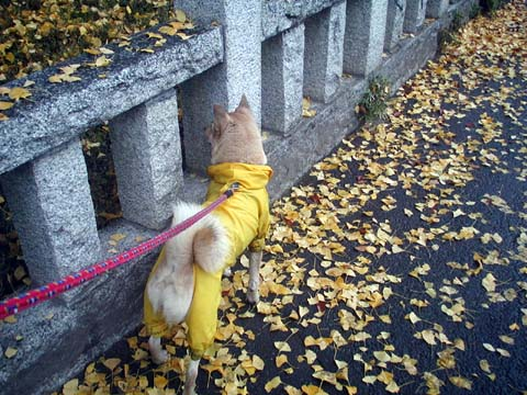 kuru_blog11.jpg