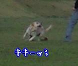 CA390060_20081029220207.jpg