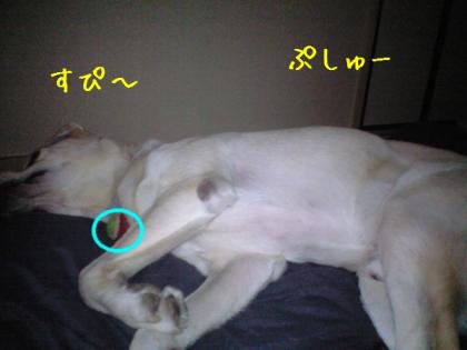CA390069_20080921164956.jpg