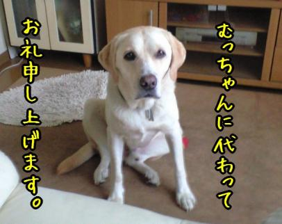 CA390081_20080930144804.jpg