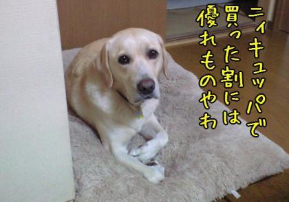 CA390098_20080930145922.jpg