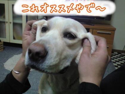 CA390215_20081215154050.jpg
