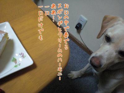 CIMG0417.jpg