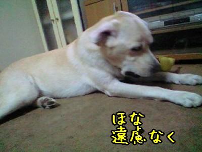 PA0_0012.jpg