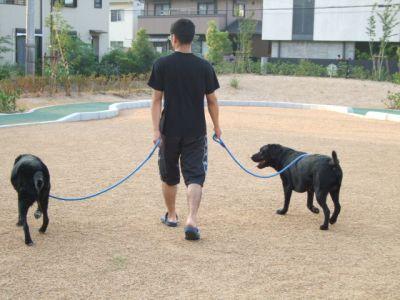 8.08.20散歩