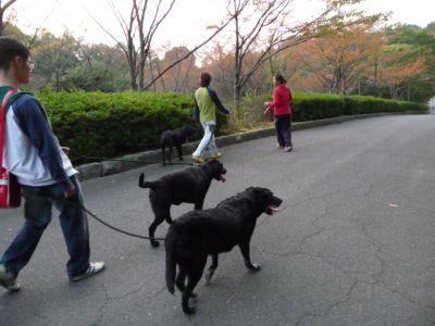 8.10.21お散歩