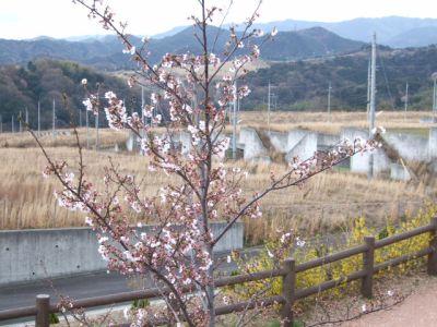 9.04.02桜