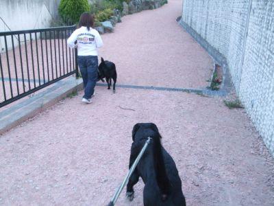 9.04.19散歩