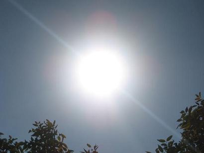 sunfl 1251