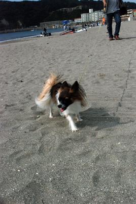 砂浜で遊ぶです