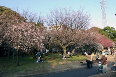 春の駒沢公園