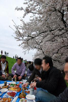 桜も見てますよ