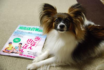 湘南鎌倉2009