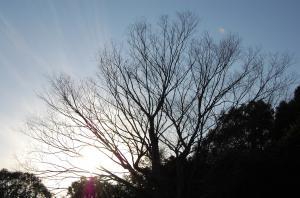 日も陰ってきました。