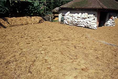 rice1-0137.jpg