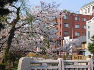 2008sakura001