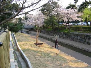 2008_sakura007