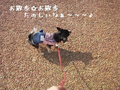 縮小お散歩