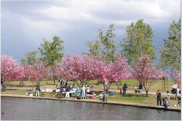 Sakura 0315 48