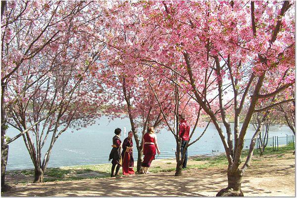 Sakura 0315 59 CP