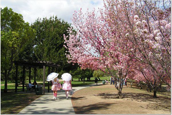 Sakura 0315 70 CP