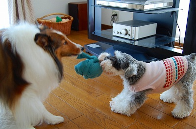 室内での犬達4
