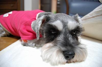 2008,2,14バレンタイン