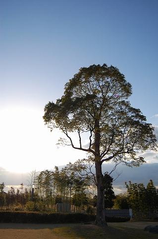 竹公園の木