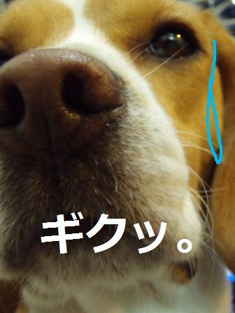 choki11.jpg