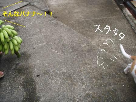choki3.jpg