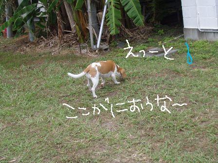 choki5.jpg