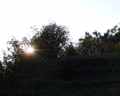 hisako1.jpg