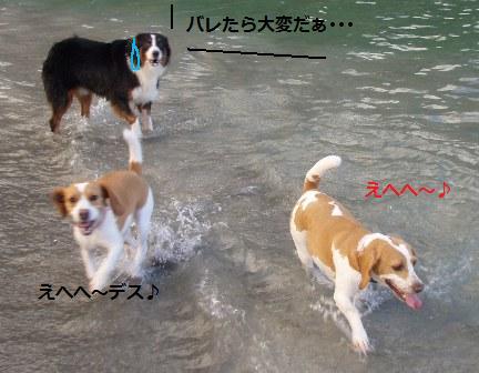 kawa8.jpg