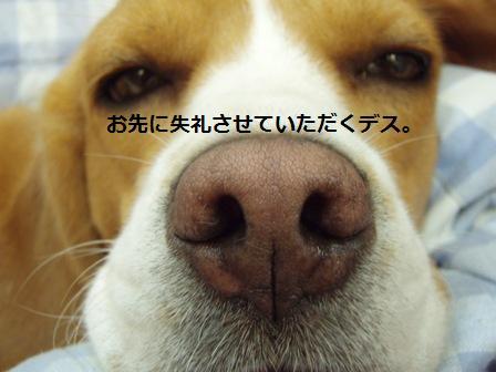 oyo3.jpg