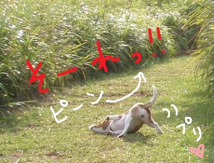 shan2.jpg