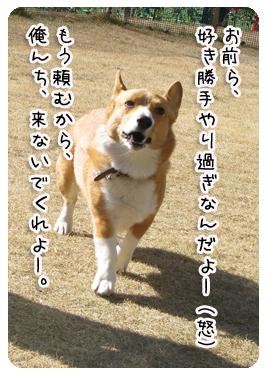 IMG_8531.jpg