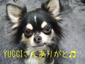 DSCF4807.jpg