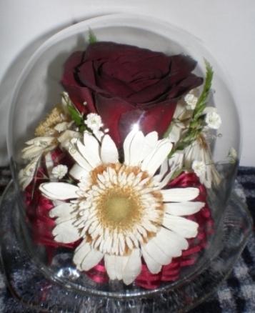 ジニのバラ