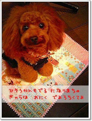 20081111_4.jpg